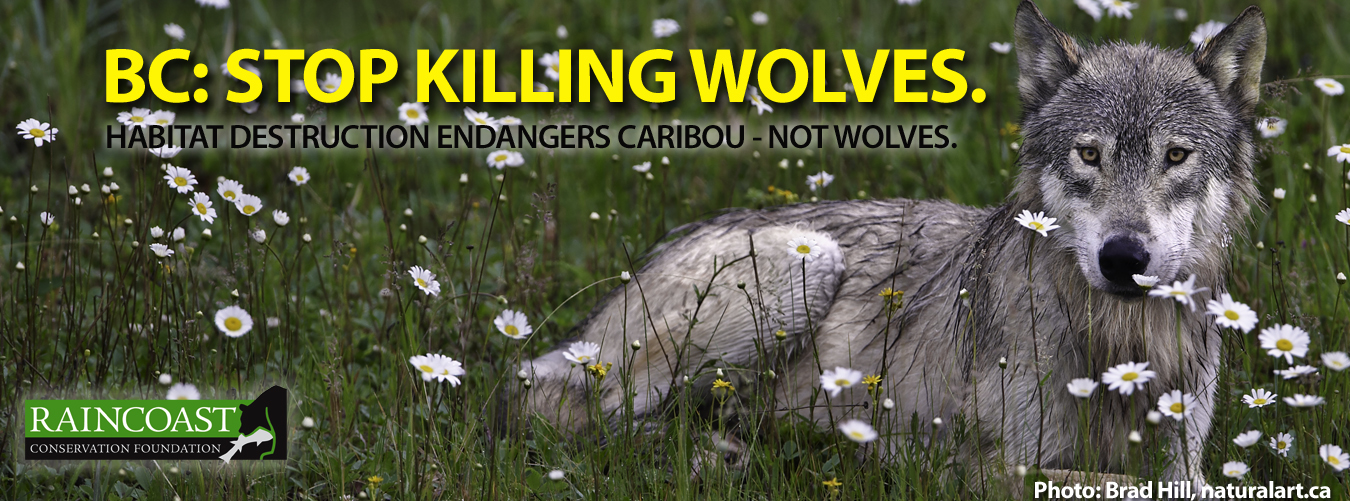 Raincoast's Wolf Cull Billboard Campaign