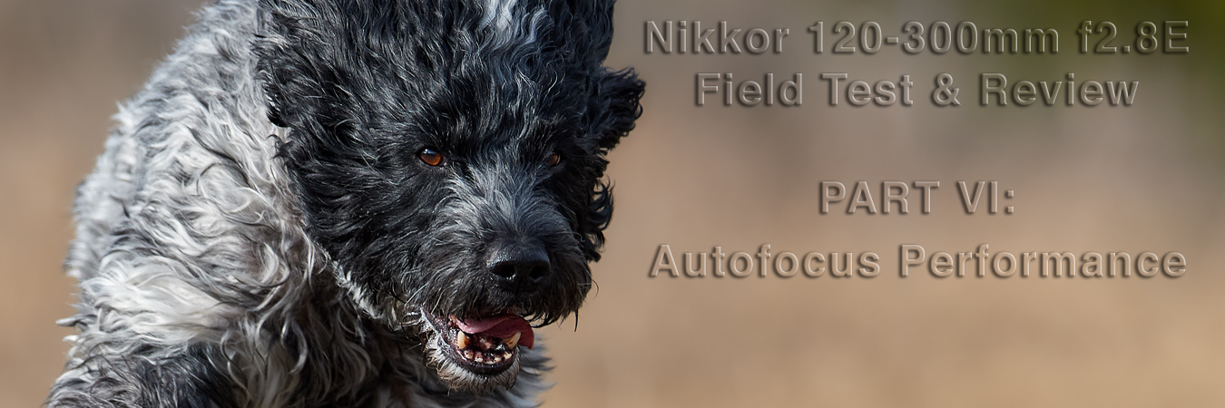 Nikkor 120-300mm f2.8E Field Test: Autofocus Performance