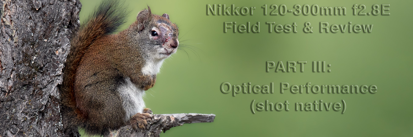 Nikkor 120-300mm f2.8E Field Test: Optical Performance