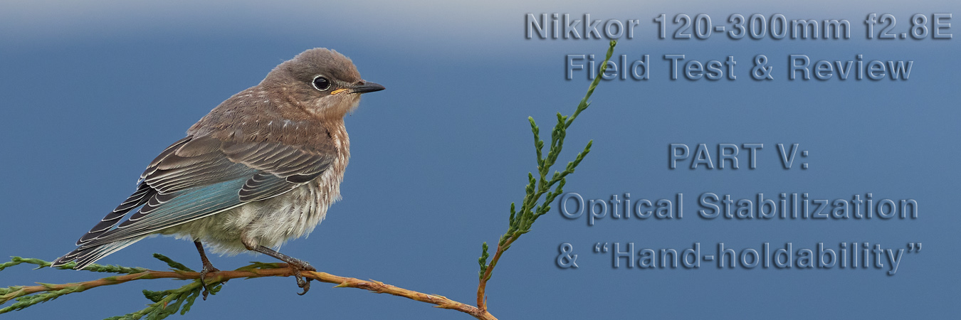 Nikkor 120-300mm f2.8E Field Test: Optical Stabilization & Hand-holdability
